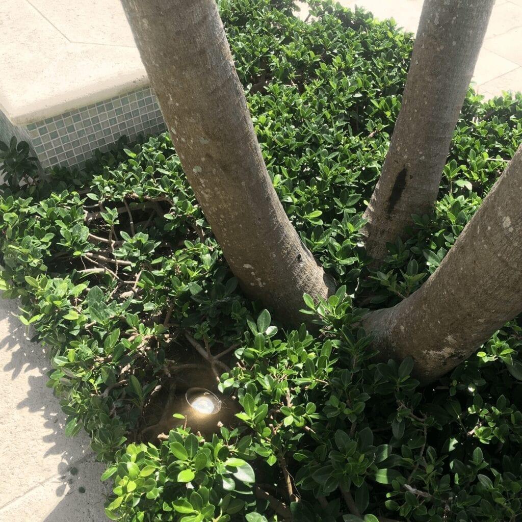 Boca Raton - Royal Palm