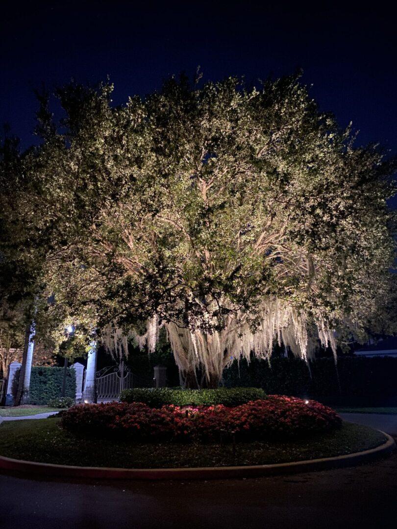 Tree Uplighting2